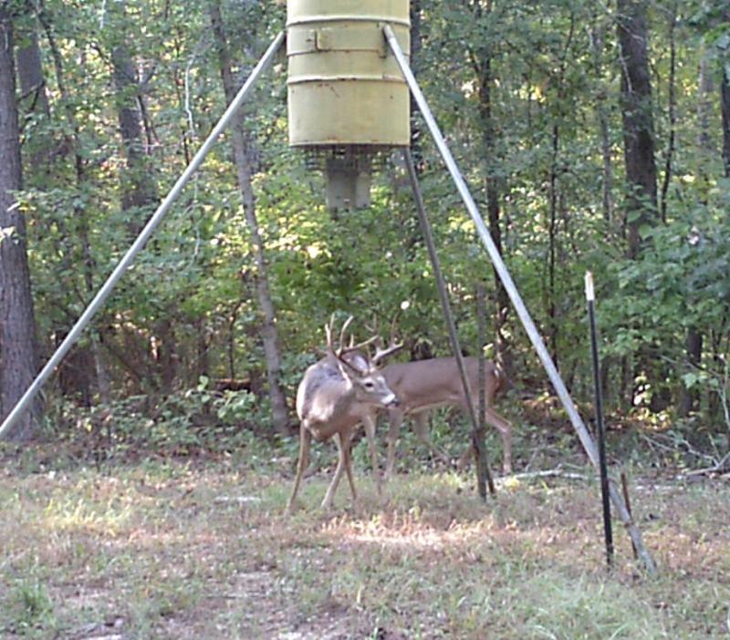 trailcam total s foot tsc hunter lid feeder feeders american post ideas deer three from fence showthread stainless lowes steel drum vb