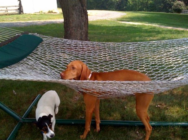 Attached Images - Hammock Camping With A Dog - TexasBowhunter.com Community