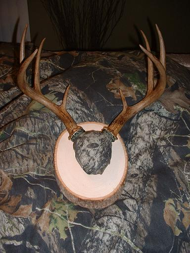 Antler and Skull Cap Mount Questions - TexasBowhunter com