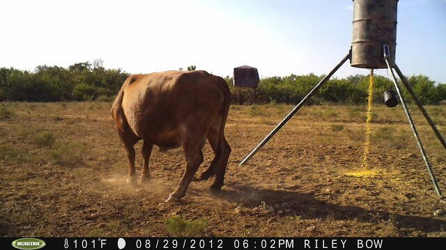 Best way to fence out cattle from feeders - TexasBowhunter
