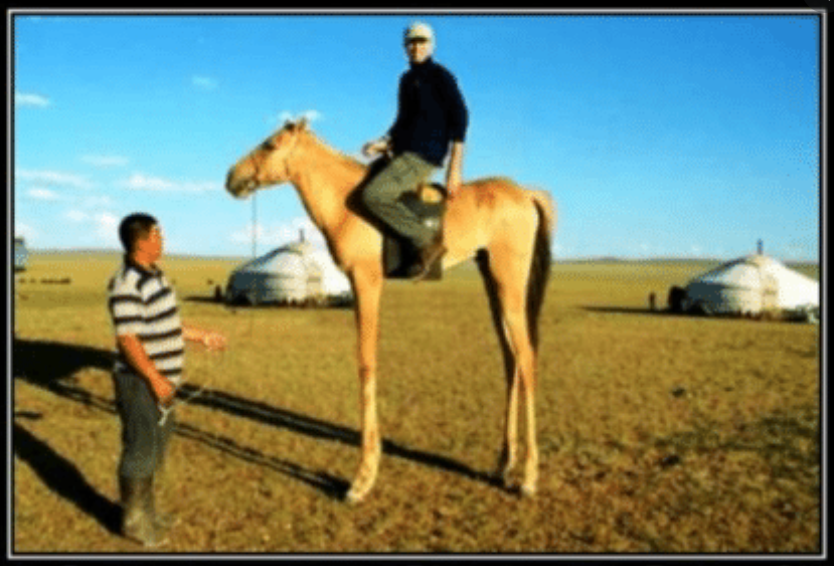 Name:  high horse.PNG Views: 1947 Size:  861.1 KB