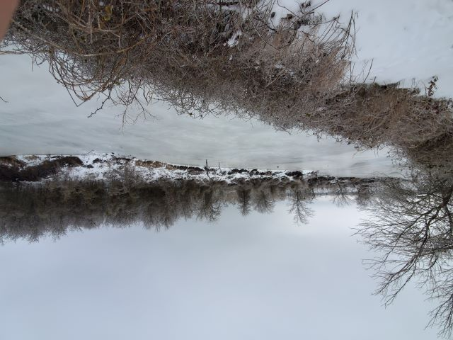 Name:  Water plant slough iced over.jpg Views: 563 Size:  59.5 KB