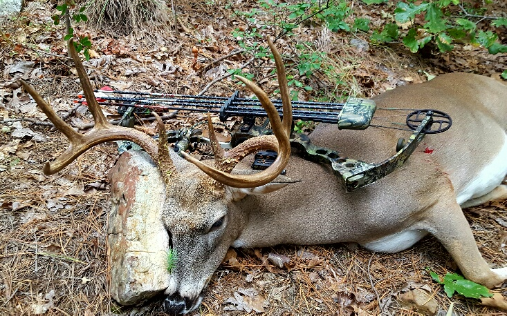 Name:  2016buck2.jpg