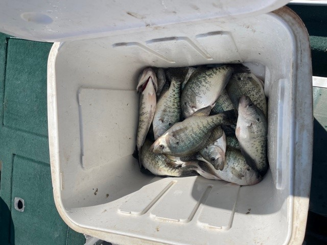 Name:  crappie 04 21.jpg