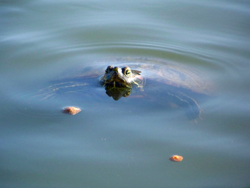 Name:  turtle.jpg