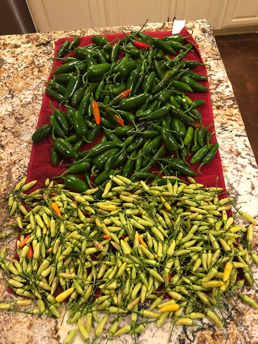 Name:  PEPPERS-2018.jpg Views: 909 Size:  251.4 KB