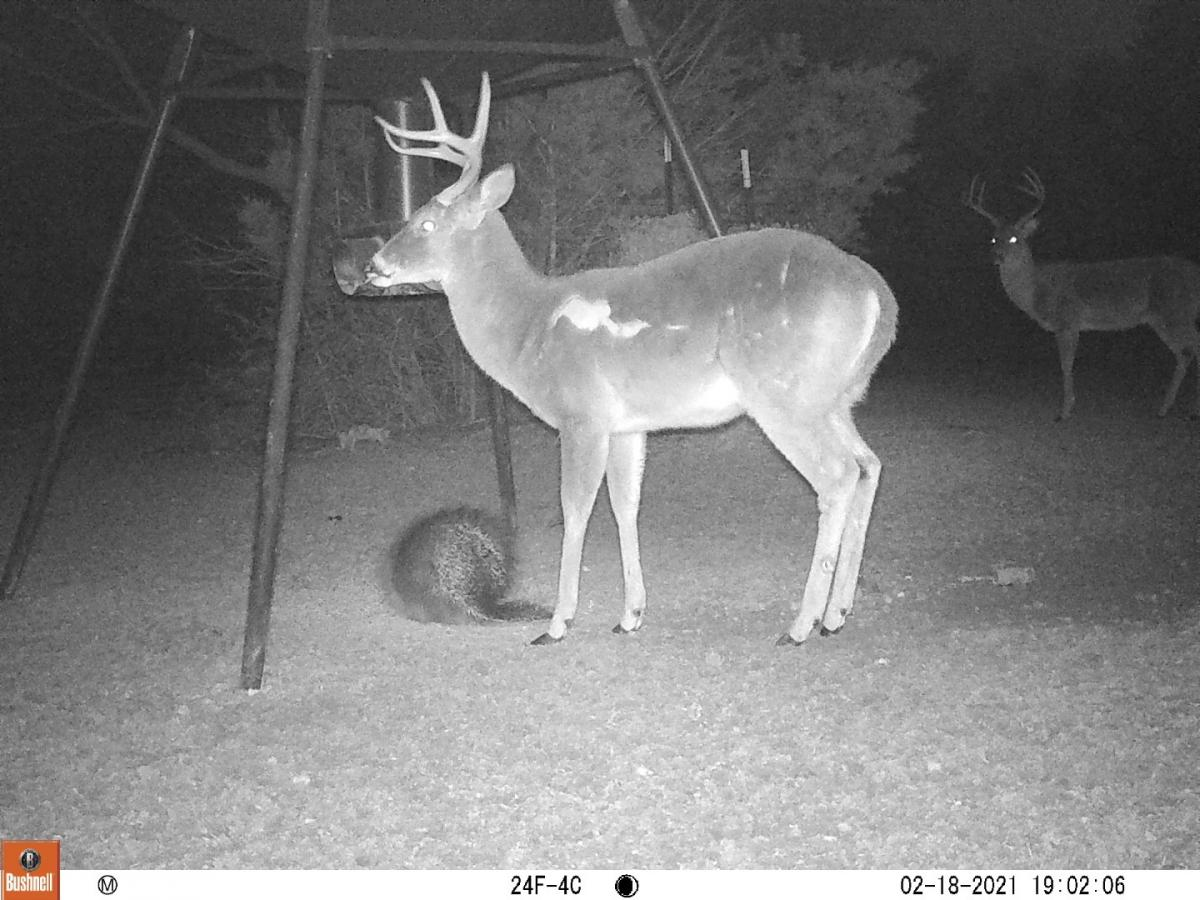 Name:  8pt with Scar (2) (Large).jpg Views: 907 Size:  144.4 KB