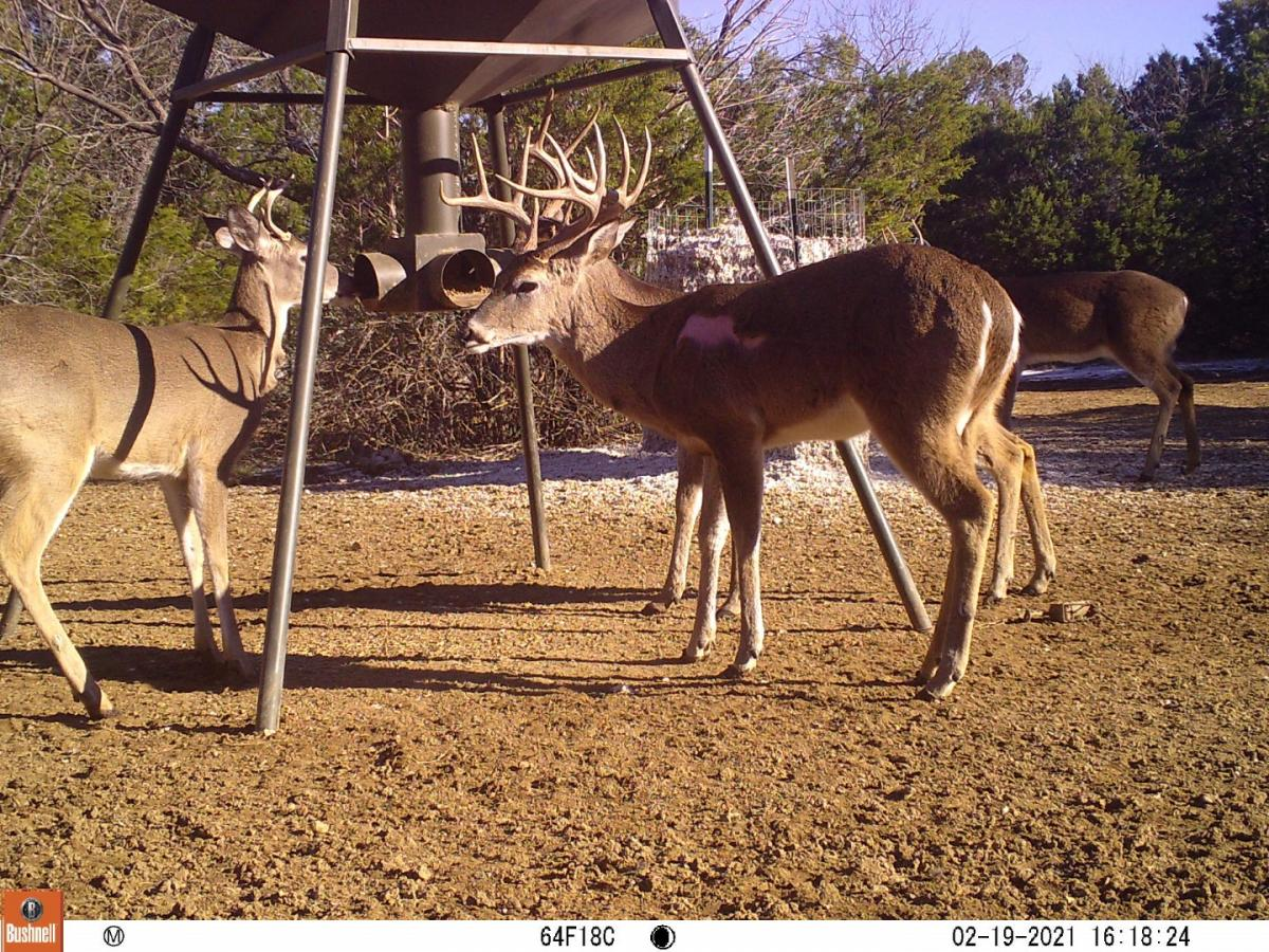 Name:  8pt with Scar (1) (Large).jpg Views: 1229 Size:  292.7 KB