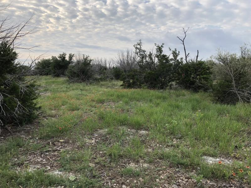 Name:  Clearing - Hand Seeded Native Grasses.jpg Views: 270 Size:  103.1 KB